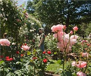 Photo of Minot Playground and Rose Garden - Brookline, MA