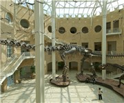 Fernbank Museum of Natural History - Atlanta, GA (404) 929-6300