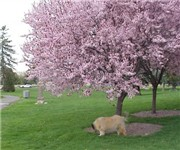 Photo of Veterans Memorial Park - Boise, ID