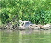 Photo of Vermilion River Reservation - Vermilion, OH