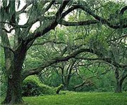 Photo of Brazos Bend State Park - Damon, TX
