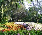 Photo of Harry P. Leu Gardens - Orlando, FL