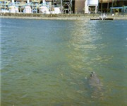 Photo of Manatee Viewing Center - Apollo Beach, FL
