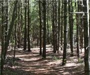 Photo of Copicut Woods - Fall River, MA