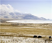 Photo of Antelope Island - Syracuse, UT