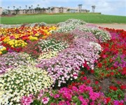 Photo of The Flower Fields - Carlsbad, CA