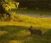Photo of Osborn Park - Huron, OH
