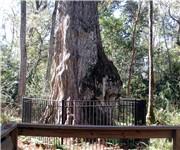 Photo of Big Tree Park - Longwood, FL