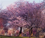 Photo of BELLEVILLE PARK - Belleville, NJ
