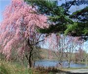 Photo of Edgewood Park - New Haven, CT