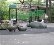 Photo of Hippo Playground - New York, NY